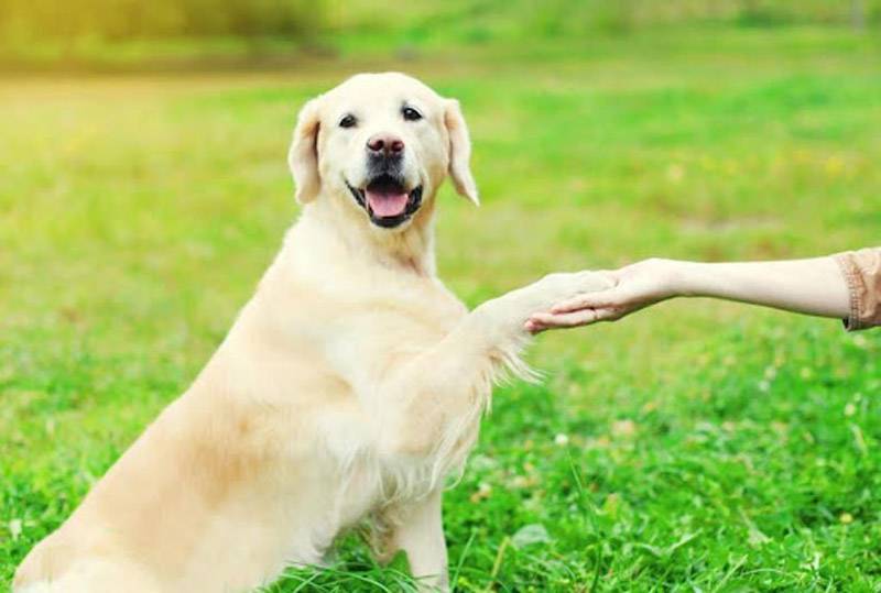 Curso online de adestramento de cães