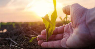 Curso online de agronomia