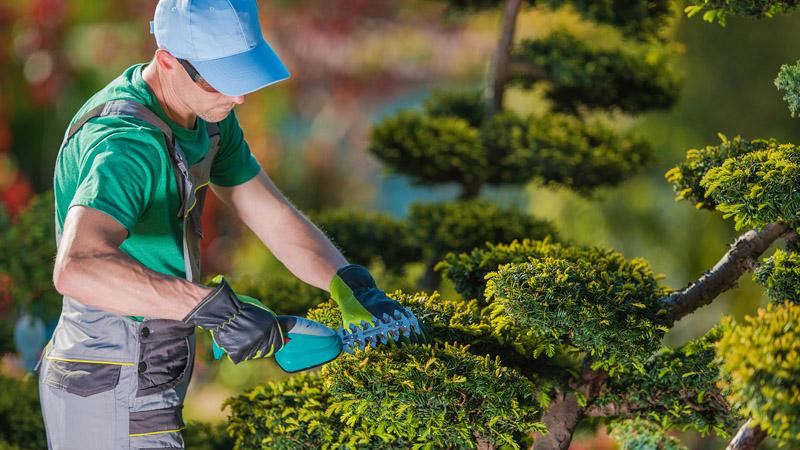 Curso online de jardinagem