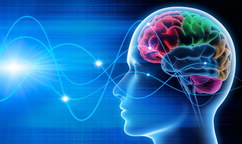 Curso online de Neurociência